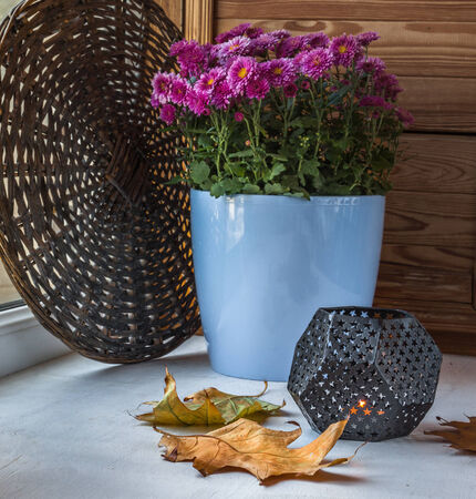 Autumnal design windows with a candle, fallen leaves and flowering chrysanthemums bush in a pot photo