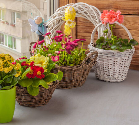 fascination: Spring composition of daisies and primroses in baskets on window