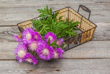 centaurea: Bouquet of purple cornflowers - (Centaurea dealbata Willd.)