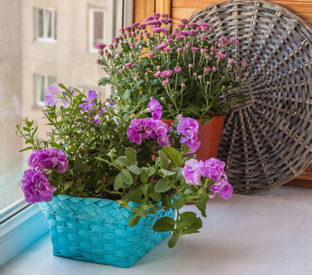 balcony window: Double petunia in a basket on the balcony window Stock Photo