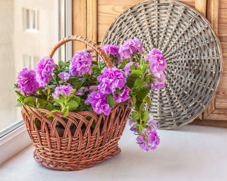 balcony window: Double petunia in a basket on the balcony window Stock Photo