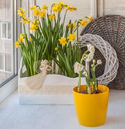 balcony window: White and yellow daffodils on the balcony window