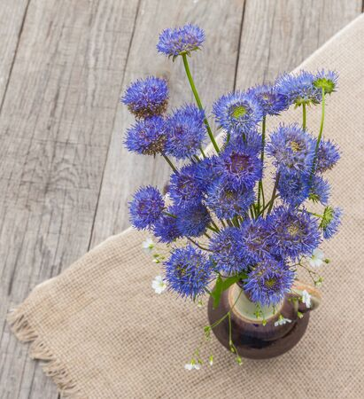 globular: Blue balls Globular (Globularia) flowers on a wooden background