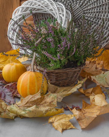 erica: Autumn still life with Heather in a basket and dry leaves and pumpkins Stock Photo