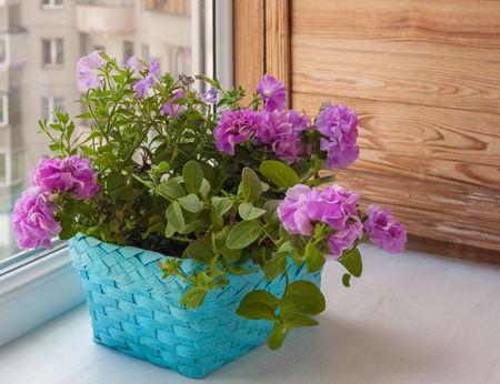 balcony window: Petunia in a basket on the balcony window Stock Photo