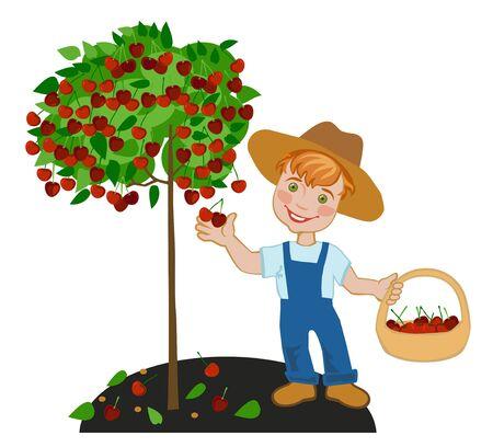 happy farmer: Boy happy farmer collects ripe cherries