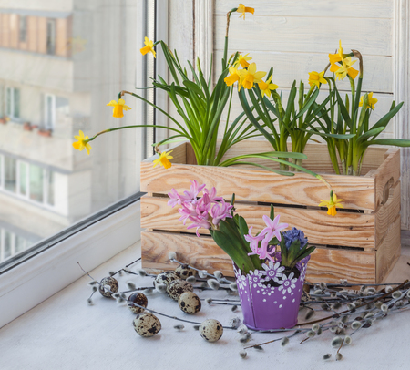 forcing: Decorated Easter eggs blooming daffodils in balcony boxes for flowers Stock Photo
