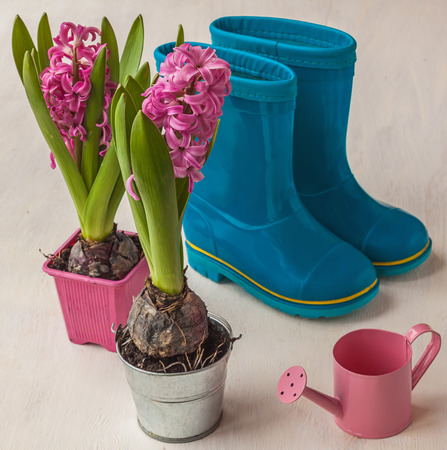 mothersday: Pink decorative watering can and pink hyacinths on a background of rubber boots