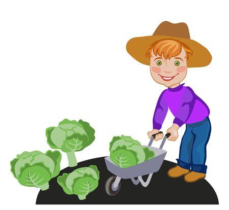 happy farmer: Happy farmer luck in wheelbarrow crop from cabbage