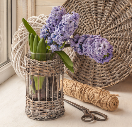 elapsed: Hyacinths  bloom in the window on the background of scissors and circles