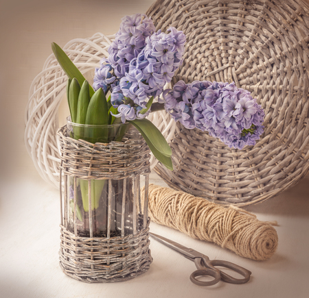 elapsed: Hyacinths  bloom in the window on the background of scissors and circles. Retro toning
