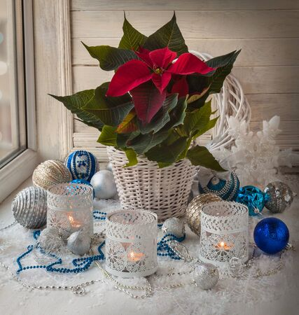 pulcherrima: Poinsettia  (Euphorbia pulcherrima), Christmas decorations  in the window on the eve of Christmas Stock Photo