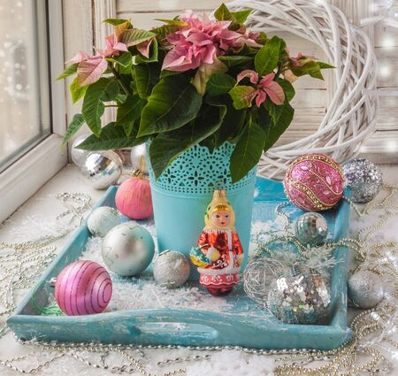 pulcherrima: Winter window with Poinsettia  (Euphorbia pulcherrima) with pink leaves and vintage Christmas decorations (products of mass production) Stock Photo