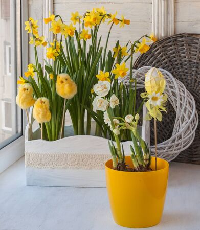 forcing: Easter composition on the balcony of daffodils and Easter stickers Stock Photo