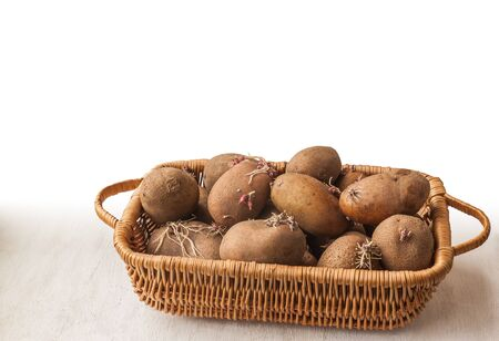 puckered: Potato tubers with sprouts roots spring in a basket Stock Photo