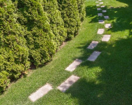 hedges: The path in the garden along the hedges of arborvitae