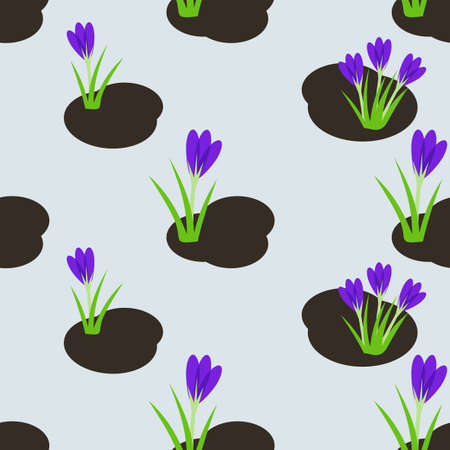 crocus: Seamless spring pattern with   crocus flowers.