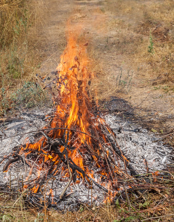 natural force: The bonfire among dry grass, close-up.