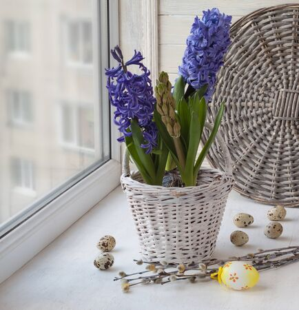 forced: Hyacinths in a white basket and easter eggs on the window Stock Photo