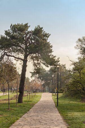 parque de Kyoto de callejón Sakura en Kiev, Ucrania, el resorte temprano por la mañana Foto de archivo