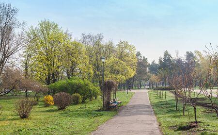Alley Sakura's Kyoto park in Kiev, Ukraine, early morning spring