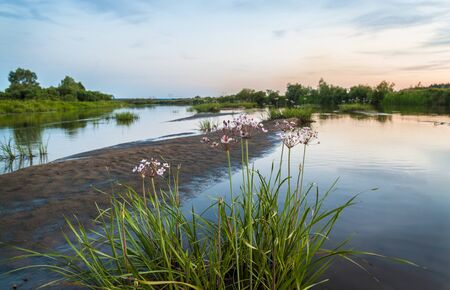 hydrophyte: Sunset on Teteriv River in the forest-steppe part of Ukraine