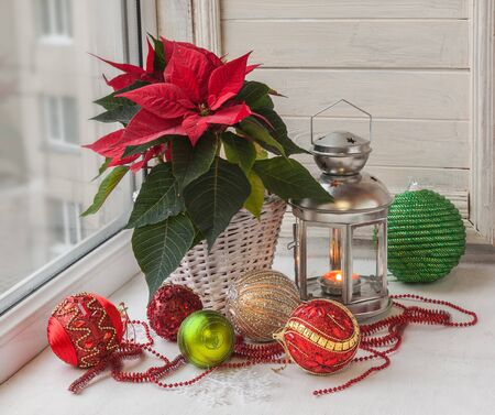 pulcherrima: Poinsettia  (Euphorbia pulcherrima), Christmas decorations  in the window on the eve of Advent