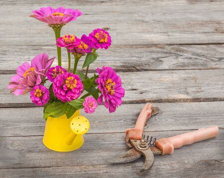 secateur: Zinnia flowers in a decorative watering can on a wooden table Stock Photo