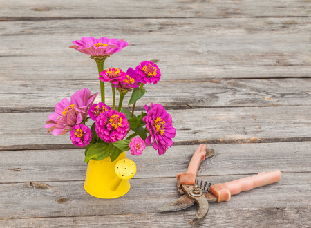Zinnia flowers in a decorative watering can on a wooden table Stock Photo