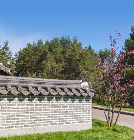 magnolia soulangeana: KIEV, UKRAINE: Apr17, 2016 in Kyiv Botanical Garden named Grishko, opened exhibition Korean garden Pavilion (Pagoda) is similar to pavilion Aeryundzhun, located in Palace Changduk in Seoul, Korea.