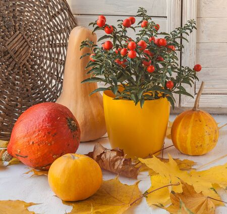Window Decor for Thanksgiving with pumpkins and nightshade on the  maple leaves Stock Photo