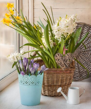 Crocuses, daffodils and hyacinths on a window sill with braided heart, a romantic holiday