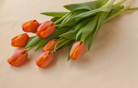 Bouquet of seven orange tulips on a yellow background Stock Photo