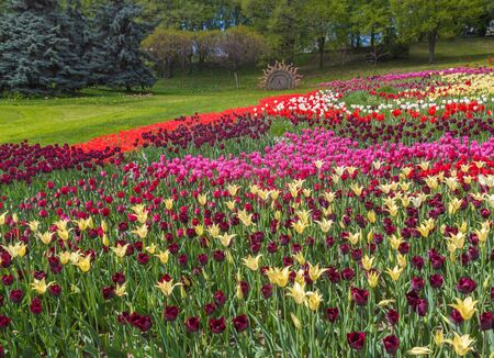 KIEV, UKRAINE - APR 23: From April 20 to May 29, 2016 on Spevoche pole in Kiev opened 61 exhibition of flowers, tulip festival Flower of the river is used 250 thousand tulips in Kiev, Ukraine