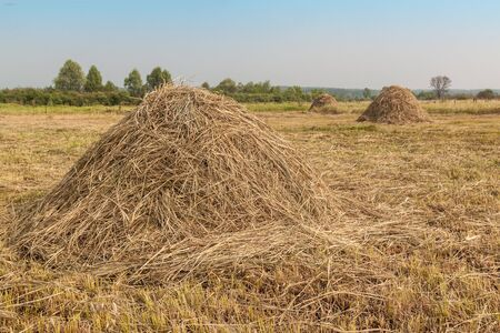 expanse: Haystacks on the meadow on a sunny summer  morning Stock Photo