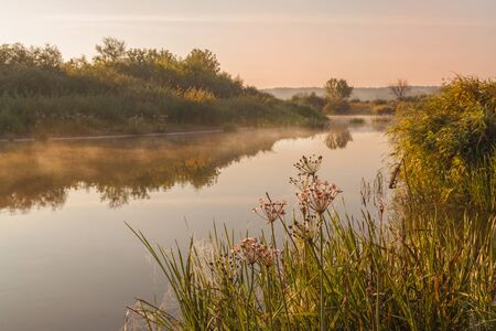 Foggy sunrise on a small river in Polesie overgrown with Butomus umbellatus Stock Photo