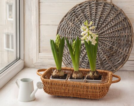 decorative balcony: White hyacinths and decorative watering can on the window.