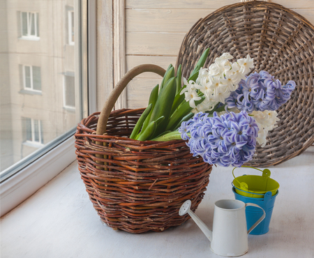 hyacinths: White and blue hyacinths in a basket next to a decorative watering can on the window Stock Photo
