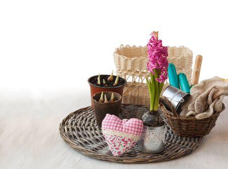forced: Still life with pink hyacinth, garden tools and decorative heart. The concept of gardening hobby