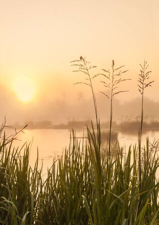 Foggy sunrise on a small river in Polesie