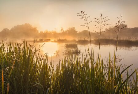 Foggy sunrise on a Teterev river in Polesie overgrown with Butomus umbellatus