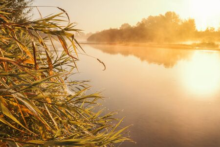 Grass in drops of dew on the river bank in the misty dawn