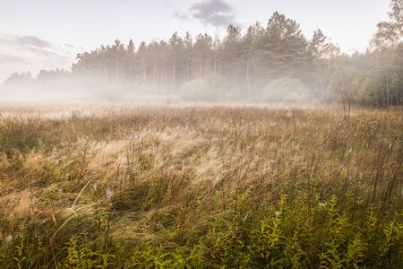 pastureland: Misty dawn in the meadow on a summer morning