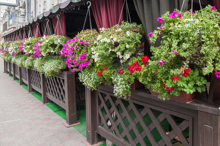 Blossoming geranium and petunia on the terrace of a street cafe Stock Photo