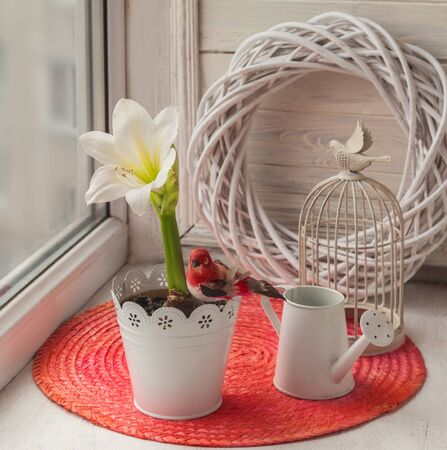 White amaryllis, decorative watering can and cage on the window Stock Photo