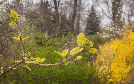 Blossoming trees in a botanical garden on a spring day Stock Photo