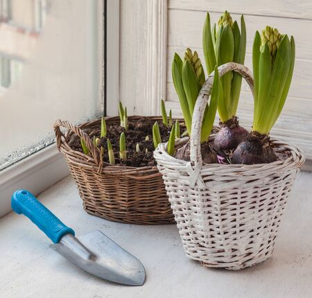 Garden shovel and flowers in a basket on the window