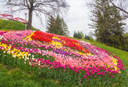 KIEV, UKRAINE - APR 29: From April 13 to May 10, 2017 on Spevoche pole in Kiev opened  exhibition of flowers, tulip festival Mystery of Easter Eggs is used 200 thousand tulips in Kiev, Ukraine