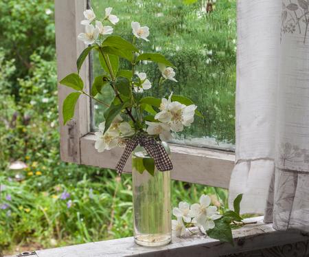 Jasmine on the window in the rain Stock Photo