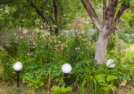 catchment: A flowerbed with lanterns in the tree trunk of an apple tree in the garden.